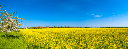 Panoramic view of beautiful farm landscape of rapeseed field in Spring, Germany, sunny day Stock Photo