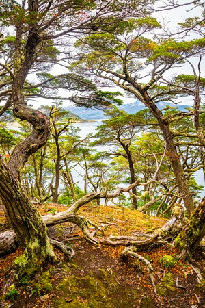 Beautiful landscape of lenga forest, mountains and lagoon at Tierra del Fuego National Park, Patagonia, summer time