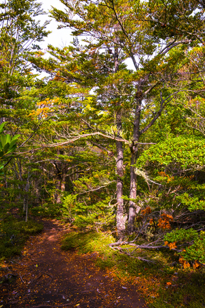 Magical colorful fairytale forest at Tierra del Fuego National Park, Patagonia, Argentina Banque d'images - 119148717