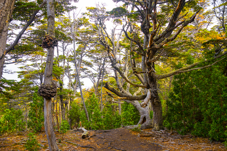 Magical colorful fairytale forest at Tierra del Fuego National Park, Patagonia, Argentina Banque d'images - 119148718