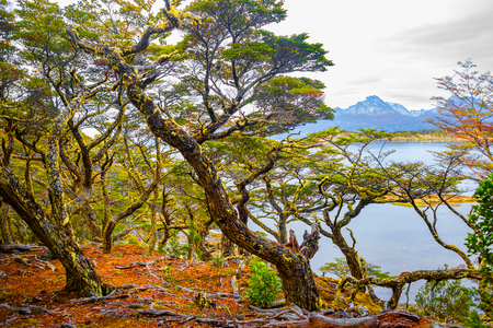Magical colorful fairytale forest at Tierra del Fuego National Park, Patagonia, Argentina Banque d'images - 119148719