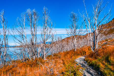 Panoramic view of Torres del Paine National Park, its forests, lagoon at golden Autumn, Patagonia, Chile Banque d'images - 119148730