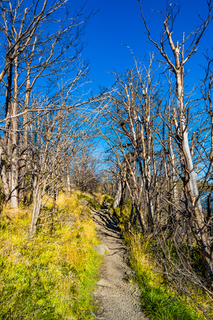 View of Torres del Paine National Park, its forests and hiking trail at Autumn, Patagonia, Chile Banque d'images - 119148702
