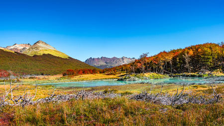 Beautiful landscape of lenga forest, mountains at Tierra del Fuego National Park, Patagonia, autumn Banque d'images - 119148785
