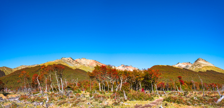 Beautiful landscape of lenga forest, mountains at Tierra del Fuego National Park, Patagonia, autumn Banque d'images - 119148825