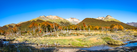 Beautiful landscape of lenga forest, mountains at Tierra del Fuego National Park, Patagonia, autumn Banque d'images - 119148827