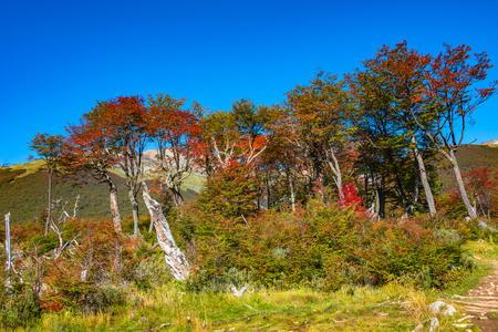 Beautiful landscape of lenga forest, mountains at Tierra del Fuego National Park, Patagonia, autumn Banque d'images - 119148828