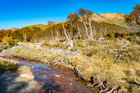 Beautiful landscape of lenga forest, mountains at Tierra del Fuego National Park, Patagonia, autumn Banque d'images - 119148830
