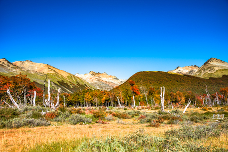 Beautiful landscape of lenga forest, mountains at Tierra del Fuego National Park, Patagonia, autumn Banque d'images - 119148832