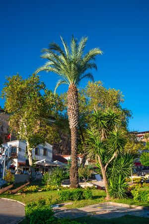 Beautiful date palm tree in front of blue sky with edible sweet fruits, Mediterranean sea Stok Fotoğraf