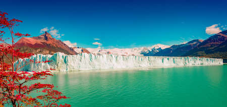 Panoramic view over gigantic full size Perito Moreno glacier in Patagonia with blue sky and turquoise water glacial lagoon, and red lenga trees in Autumn colors, South America, Argentina, at sunny day