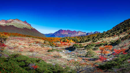 Panoramic view over magical colorful valley with austral forests, peatbogs, dead trees, glacial streams and high mountains in Tierra del Fuego National Park, Patagonia, Argentina, golden Autumn