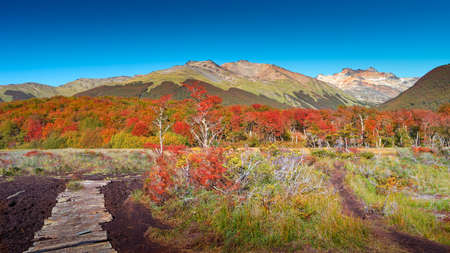 Panoramic view over magical austral forest, peatbogs, high mountains and hiking path in Tierra del Fuego National Park, Patagonia, Argentina, golden Autumn Stok Fotoğraf
