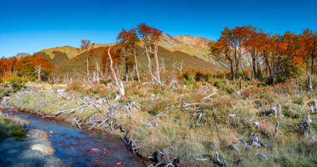 Panoramic view over magical austral forest, peatbogs dead trees, glacial streams and high mountains in Tierra del Fuego National Park, Patagonia, Argentina, golden Autumn