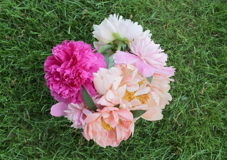 Bouquet of pink peonies from above
