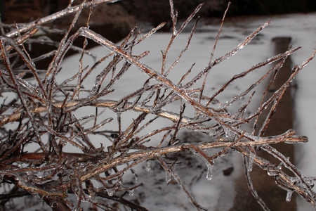 Ice covered branches after freezing rain