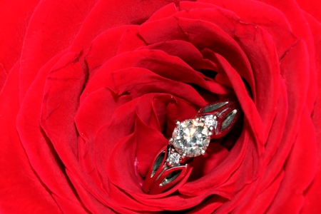 Engagement ring and red rose