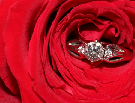 Red rose and diamond ring close-up Stock Photo