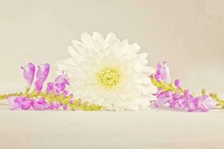 Flower arrangement with white and purple flowers