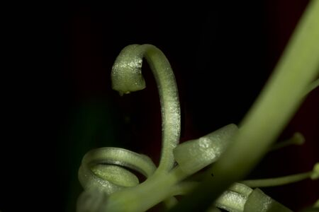 Plant tendril curled up like a snake