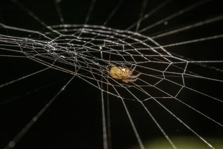 lurking: spider on the web at night Stock Photo