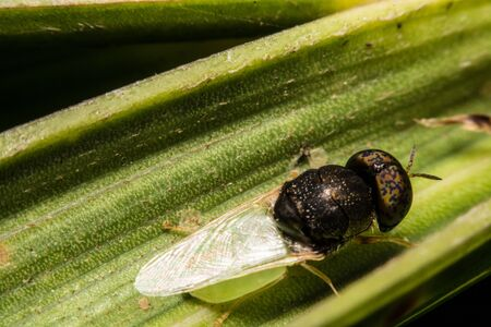 nude outdoors: insect fly macro on leaf Stock Photo