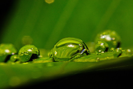 plant nature: fresh green leaf with water droplets, super macro