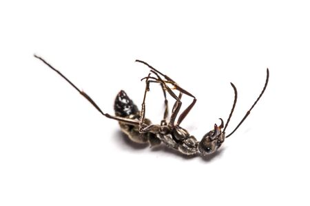 feelers: closeup of ants on a white background Stock Photo