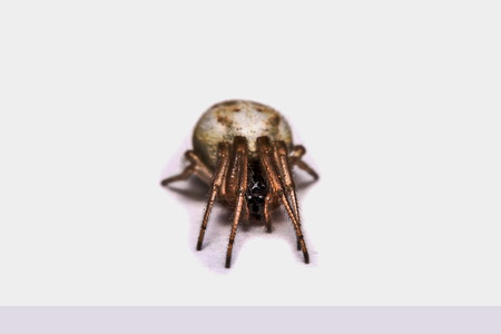 asterix: Macro, Close-up, it was a spider living in Thailand. Stock Photo