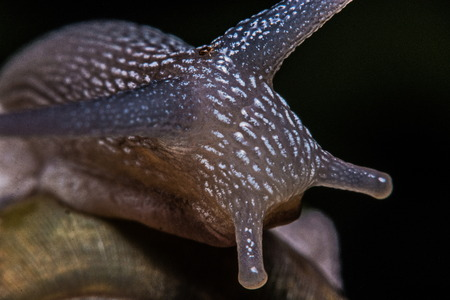 slithery: Macro, Close-up, snail in the garden beside the house. Stock Photo