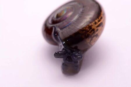 slithery: Close up snake black  on a white background