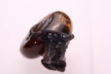 land slide: Close up snake black  on a white background