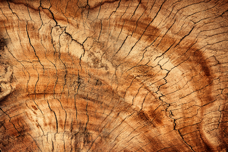 Wood texture or wood background. Wood for interior exterior decoration and industrial construction concept design.