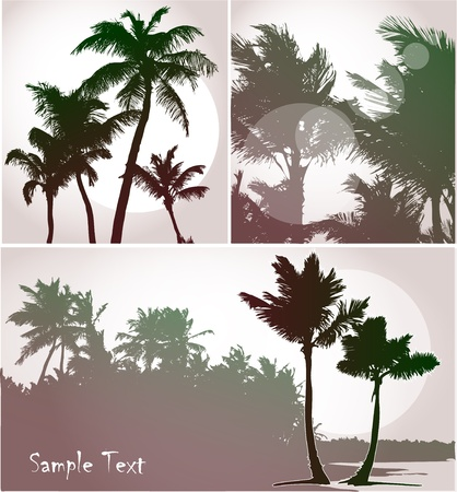 Palm trees in sunset light, vector silhouettes collection