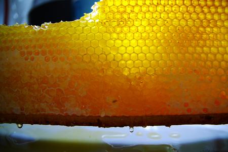 Honeycombs in frame, full of honey. Fresh goney drops photo