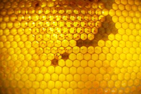 Honeycombs in frame, full of fresh honey. photo