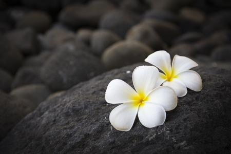 armonía: Flores blancas exóticas en la piedra gris oscuro. Bienestar y armonía símbolo