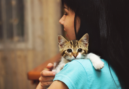 human hands: Young woman caressing a tabby kitten. Cat resting on owners shoulder.