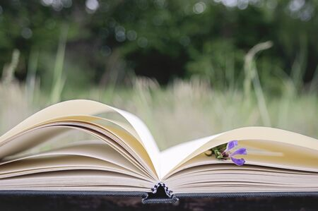 book concept: Opened book on a natural background
