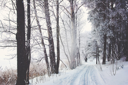 road through frozen forest with snow Stock Photo