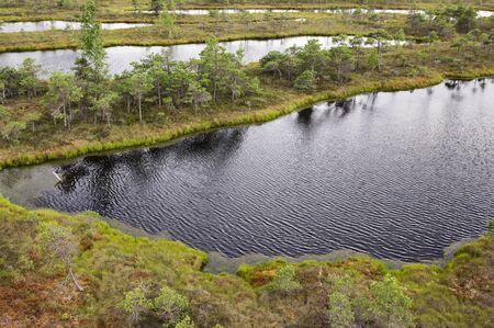 bog: Kemeri bog in Latvia, popular eco-tourism place Stock Photo