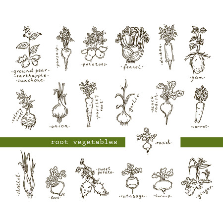 root vegetables: Set of root vegetables
