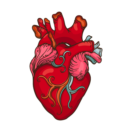 Drawing of stylized Human Heart illustration.