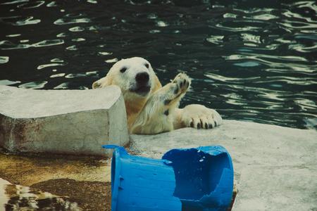 Polar bear in the Moscow zoo Archivio Fotografico