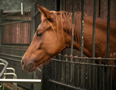 Brown horse in the Moscow zoo