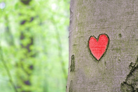 bark carving: red heart engraved in the tree Stock Photo