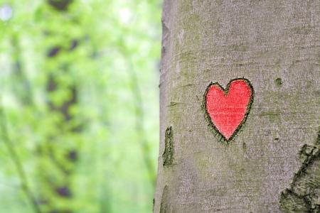 rood hart in de boom gegraveerd Stockfoto