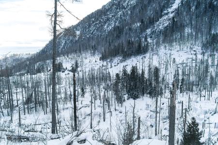 damaged: damaged forest Stock Photo