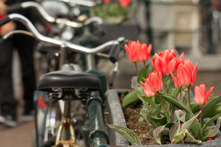 amsterdam tulips and bike