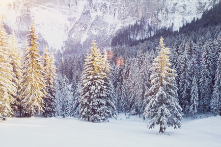 beautiful winter landscape with snow and fir trees